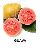 All flavors of guava to make e-liquids for vaping.